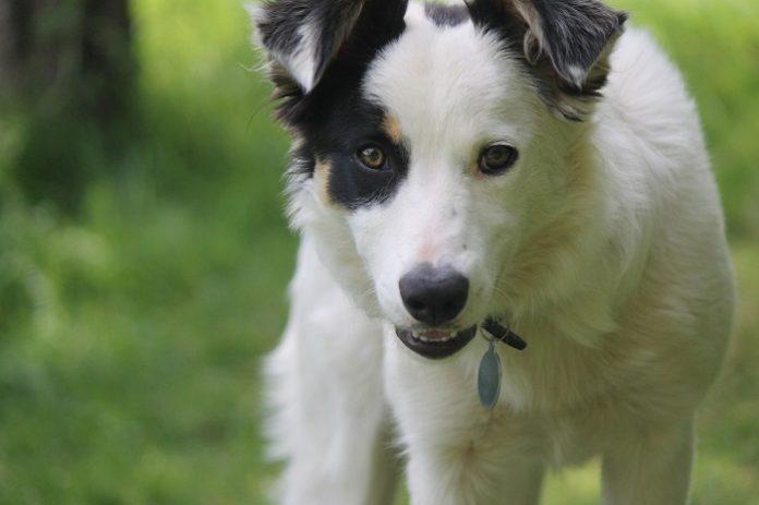 Detenido por apropiarse del dinero que recaudaba para curar animales