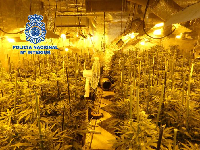 La Policía desmantela en Toledo dos plantaciones indoor de marihuana