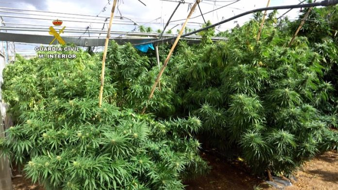 Acaban con la mayor red de marihuana descubierta en España